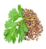 coriander-seed-waash