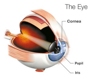 eye corneal abrasion